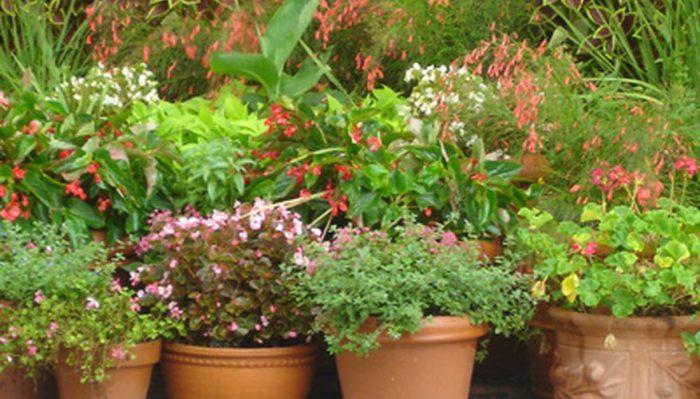 Un coin particulier avec des vases décorés