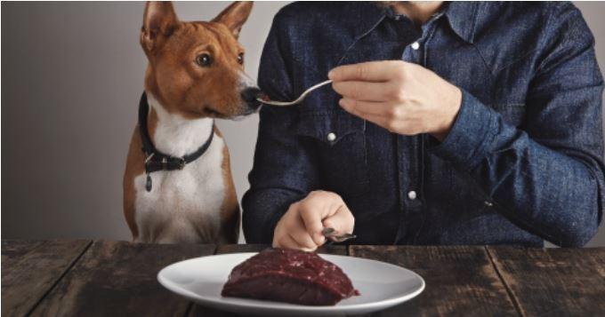Préparez la nourriture de votre chien vous-même