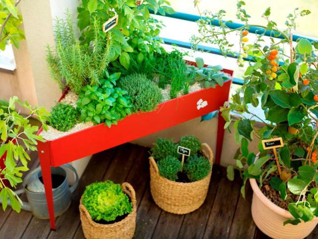Plantez ses légumes et fruits